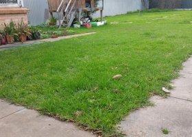 Big Back Yard in Frewville SA.jpg